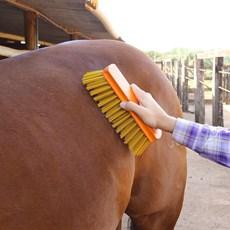 Escovão para Limpeza e Higienização de Animais - Rodeo West 0429 4791c275d7a